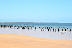Ajardine da costa atlântica de uma ilha francesa Imagem de Stock