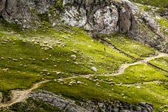 Ajardine das montanhas de Bucegi, parte de Carpathians do sul Foto de Stock Royalty Free