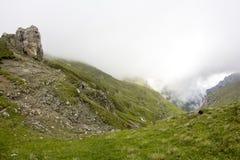 Ajardine das montanhas de Bucegi, parte de Carpathians do sul em Romênia Fotografia de Stock