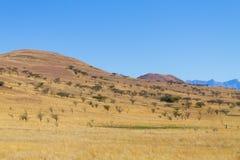 Ajardine de África do Sul, montanhas do ` s do dragão Fotos de Stock