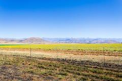 Ajardine de África do Sul, montanhas do ` s do dragão Imagem de Stock Royalty Free