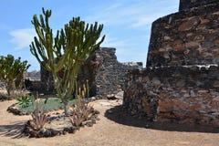 Ajardine de Fuerteventura, praia de Caleta de Fuste Ilhas Canárias spain Imagem de Stock Royalty Free