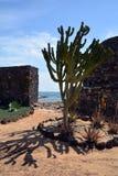 Ajardine de Fuerteventura, praia de Caleta de Fuste Ilhas Canárias spain Fotos de Stock Royalty Free