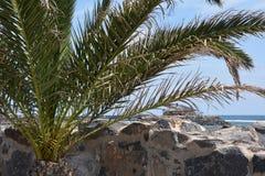 Ajardine de Fuerteventura, praia de Caleta de Fuste Ilhas Canárias spain Foto de Stock