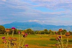 Ajardine de las montañas delanteras y de la espina púrpura del burro en Bulgaria al sudoeste cerca de Rupite imagen de archivo