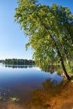Ajardine de orilla con el abedul del lago hermoso Imagen de archivo