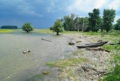 Ajardine do delta com barco, delta Dunarii de Danúbio de Romênia Imagem de Stock Royalty Free