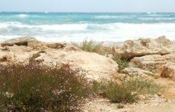 Ajardine do mar ao fundo da costa Fotografia de Stock Royalty Free