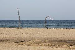 Ajardine do Mar Negro na praia em Sinemorets, Bulgária Foto de Stock