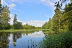 Ajardine do rio da floresta com um barco e juncos e água Lili Fotos de Stock Royalty Free