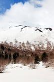 Ajardine do vulcão de Etna, com as madeiras Imagem de Stock
