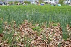 Ajardine el diseño en el parque, la hierba y las virutas, la gente que miente en el fondo Foto de archivo