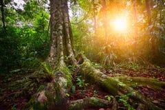 Ajardine el parque nacional Tikal de la selva tropical en Guatemala en la puesta del sol Fotos de archivo