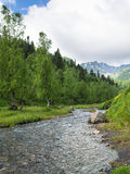 Ajardine el río de la montaña con los árboles del prado y de abedul Foto de archivo libre de regalías