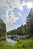 Ajardine el río del bosque demasiado grande para su edad con los lirios y las cañas de agua y Imagenes de archivo