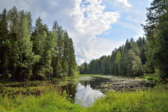 Ajardine el río del bosque demasiado grande para su edad con los lirios y las cañas de agua y Imagen de archivo