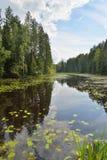Ajardine el río del bosque demasiado grande para su edad con los lirios y las cañas de agua y Imagen de archivo libre de regalías
