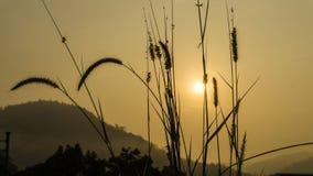 Ajardine, elevação do sol da manhã do esclarecimento da montanha nas frentes Imagens de Stock
