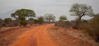 Ajardine em Afrika, no safari em Kenya Imagens de Stock Royalty Free