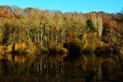 Ajardine em cores do outono com as árvores no lago ou no rio Fotos de Stock Royalty Free