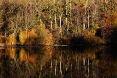 Ajardine em cores do outono com as árvores no lago ou no rio Foto de Stock Royalty Free