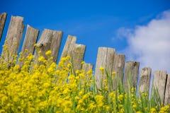 Ajardine em flores brilhantes e em uma cerca de madeira Imagens de Stock Royalty Free