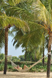 Ajardine em Goa Imagens de Stock