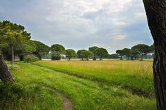 Ajardine em Itália com prados e árvores no verão Fotografia de Stock