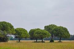 Ajardine em Itália com prados e árvores no verão Foto de Stock