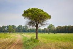 Ajardine em Itália com prados e árvores no verão Fotografia de Stock Royalty Free