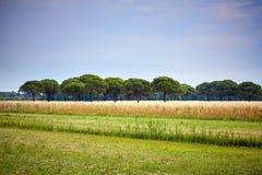 Ajardine em Itália com prados e árvores no verão Imagem de Stock Royalty Free