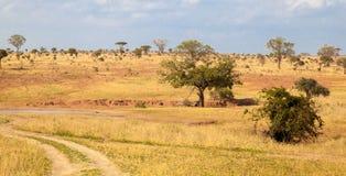 Ajardine em Kenya, uma maneira no parque Imagens de Stock Royalty Free