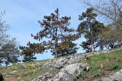 Ajardine em montanhas pequenas com grama e árvore da rocha Fotos de Stock Royalty Free
