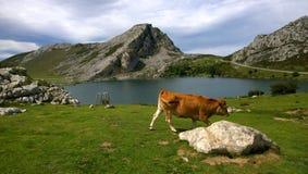Ajardine em Picos de Europa, as Astúrias, Espanha Imagem de Stock