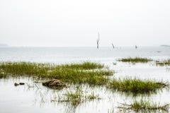 Ajardine em Toko perto do lago Volta na região de Volta em Gana Foto de Stock Royalty Free
