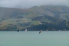 Ajardine em torno da cidade de Akaroa na península dos bancos, ao sudeste de Christchurch, Nova Zelândia Fotografia de Stock Royalty Free