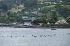 Ajardine em torno da cidade de Akaroa na península dos bancos, ao sudeste de Christchurch, Nova Zelândia Fotos de Stock