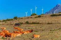 Ajardine em torno da vila branca Casares Malaga em montanhas andaluzas, Espanha Foto de Stock