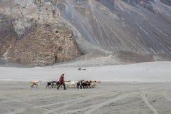 Ajardine em torno das dunas de areia de Hunder no vale de Nubra, Ladakh, Índia Fotografia de Stock Royalty Free