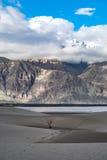 Ajardine em torno das dunas de areia de Hunder no vale de Nubra, Ladakh, Índia Imagem de Stock