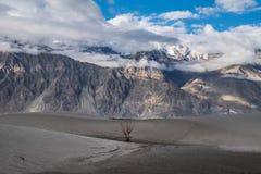 Ajardine em torno das dunas de areia de Hunder no vale de Nubra, Ladakh, Índia Imagens de Stock