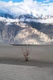 Ajardine em torno das dunas de areia de Hunder no vale de Nubra, Ladakh, Índia Fotos de Stock