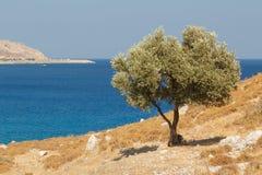 Ajardine em torno das ruínas do castelo de Feraklos, ilha do Rodes Imagens de Stock Royalty Free