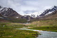 Ajardine em torno do distrito de Leh em Ladakh, Índia Imagens de Stock