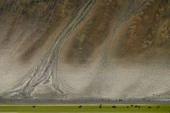 Ajardine em torno do distrito de Leh em Ladakh, Índia Fotos de Stock Royalty Free