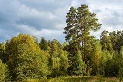 Ajardine em um dia de verão ensolarado na floresta, Fotografia de Stock