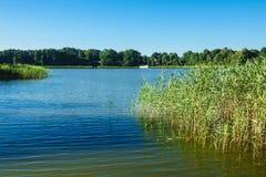 Ajardine em um lago com árvores e juncos Foto de Stock