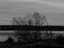 Ajardine em um lago na imagem preto e branco Imagem de Stock