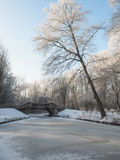 Ajardine em um parque em Alemanha do norte no inverno Fotos de Stock