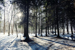 Ajardine em uma floresta no inverno adiantado Fotos de Stock